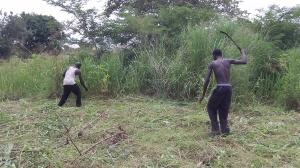 """African """"thrashing"""""""