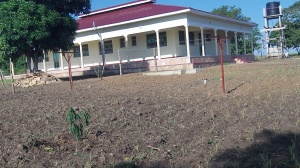 We have been clearing and planting a native grass around the Guesthouse. In the foreground is one of our many newly planted mango and we have a trellis for passion fruit