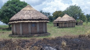 We now have new grass roofs on tukalu's. Currently we are fixing the doors and windows. These tukalu's will house 3-4 each