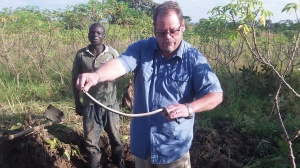 On the morning Kevin and Ron left three mambas were found 200 yards from the Guesthouse. Before they were killed Kevin gave us all a first hand lesson on them.