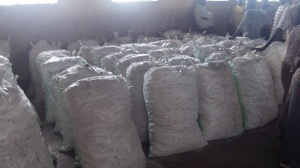 4.5 tons of cassava ready for distribution