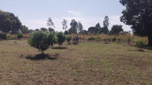 Mulching mangoes