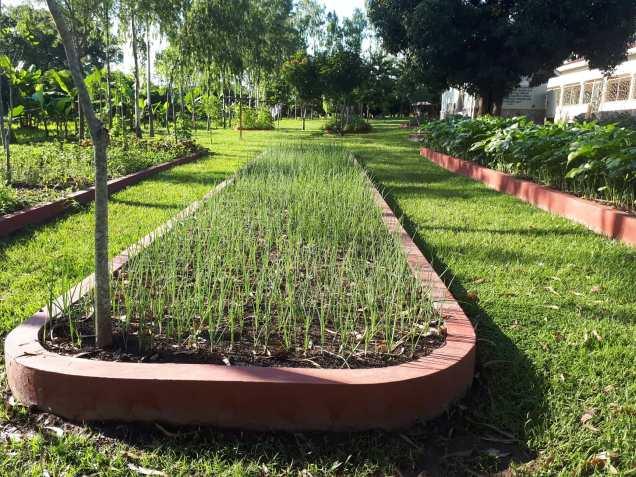 Box gardens